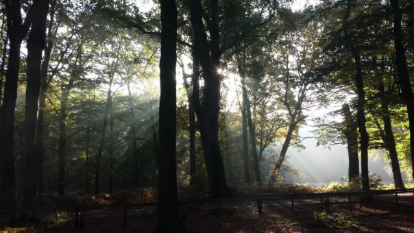 Prachtig uitzicht Hilvarenbeek